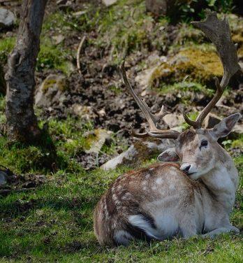 Fauna der Pyrenäen